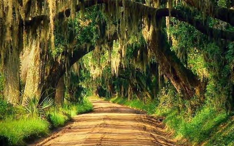 Moss Oak Tree Path