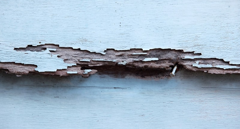 Termite Damage on Siding